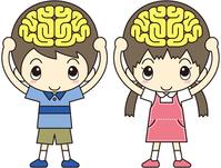Child brain [2920031] Brain