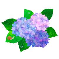 Hydrangea [2997926] Hydrangea