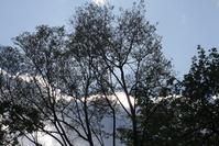 空と雲と枝