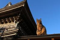 Stray cat of temple Stock photo [3004349] CAT