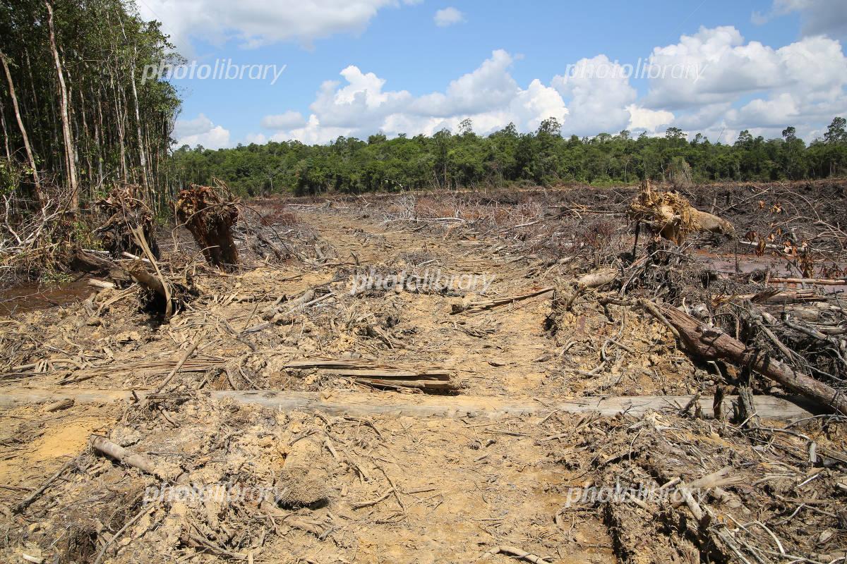 森林 破壊