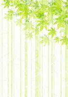 Fresh green Japanese paper-style maple [3081035] Green