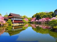 Cherry blossom of Heian Jingu Shrine Stock photo [3081155] Heian