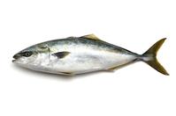 Yellowtail Stock photo [3084310] Fish