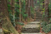 Kumano Kodo Daimon slope Stock photo [3086109] Landscape