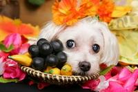 Dog vacation Stock photo [3182270] Dogs