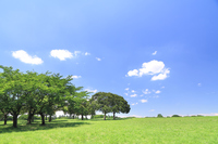 Fresh green of the park blue sky Stock photo [3183299] Blue