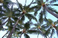 Palm trees of Hawaii Waikiki Beach Stock photo [3184375] Palm