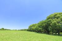 Fresh green of the park blue sky Stock photo [3184523] Blue
