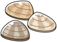 Clams [3291794] Clams