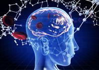 Brain erythrocyte molecular model image [3384159] Brain