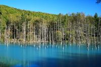 Blue pond of Biei Stock photo [3468017] Hokkaido