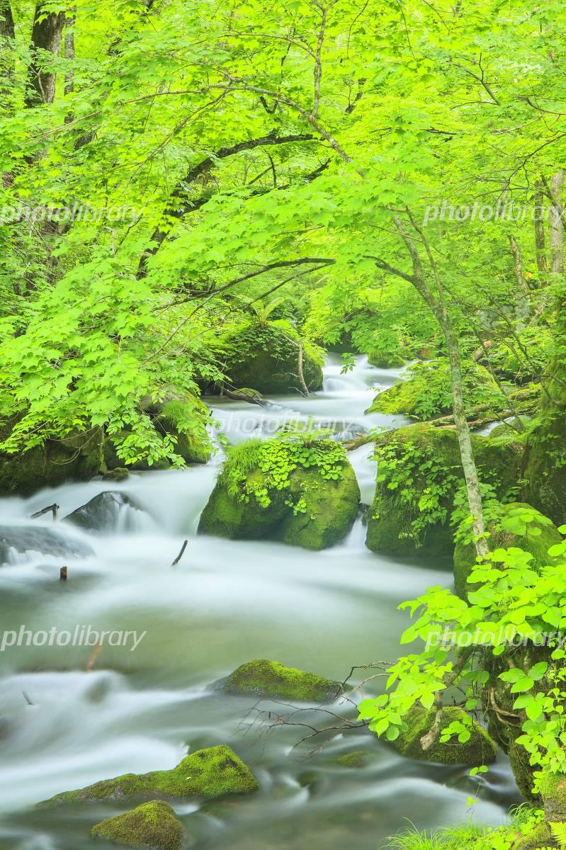 Fresh green Oirase Stream Photo