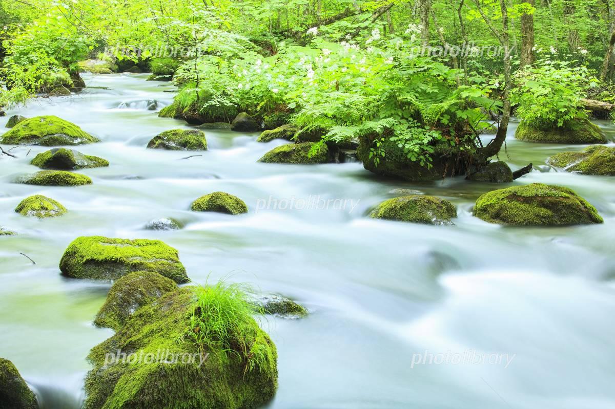 Flow of Oirase Stream three turbulent Photo