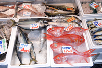 Fresh fish lined up in the over-the-counter Stock photo [3568369] Alfonsin