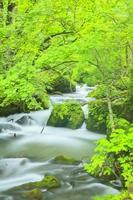 Fresh green Oirase Stream Stock photo [3572550] Oirase