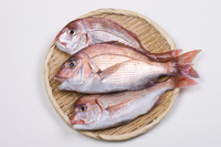 Natural red sea bream Stock photo [3581082] Red