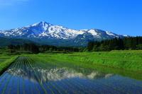 Early summer of Mt.Chokai Stock photo [3677872] Mt.Chokai