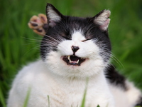 Cat to open the mouth Stock photo [3678805] Cat