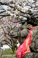 Kitano Shrine Nadegyu Stock photo [3679860] Kitano