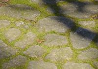 Moss green to fill the gap of Hamamatsu Castle Park Japanese garden paving stones Stock photo [3682177] Shizuoka