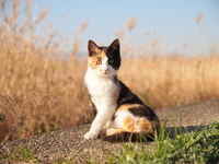 Adorable calico cat Stock photo [3684132] Cat
