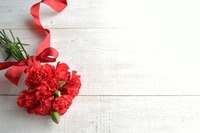 Bouquet of red carnations Stock photo [3687001] Mother's