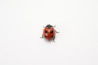 Ladybird Stock photo [3790064] Ladybird