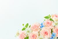 Arrange bridal image of roses Stock photo [3796641] Rose