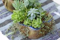 Succulent Stock photo [3801491] Sakyurento