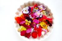 Edible flower Stock photo [3801819] Edible