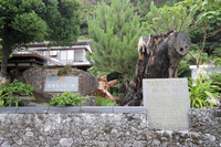 Amami Oshima Saigo Okina landing Noriyuki earth (Saigo pine site) Stock photo [3899095] Amami