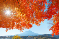 Autumn leaves and Fuji Stock photo [3903662] Mount