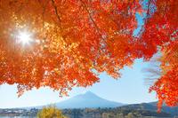 Autumn leaves and Fuji stock photo