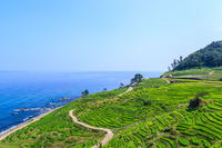 Of Noto Peninsula rice thousand Hirata Stock photo [3995526] Thousand