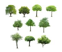 Tree White Background [4077945] wood