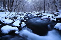 Flow of winter of Oirase Stream three turbulent Stock photo [4200705] Oirase