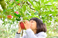 Girl to enjoy the apple picking Stock photo [4244261] person