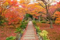 Autumn treasure cabinet Institute Stock photo [4254440] moss