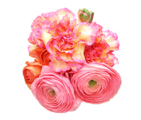 Bouquet of ranunculus and carnation Stock photo [4297185] Ranunculus