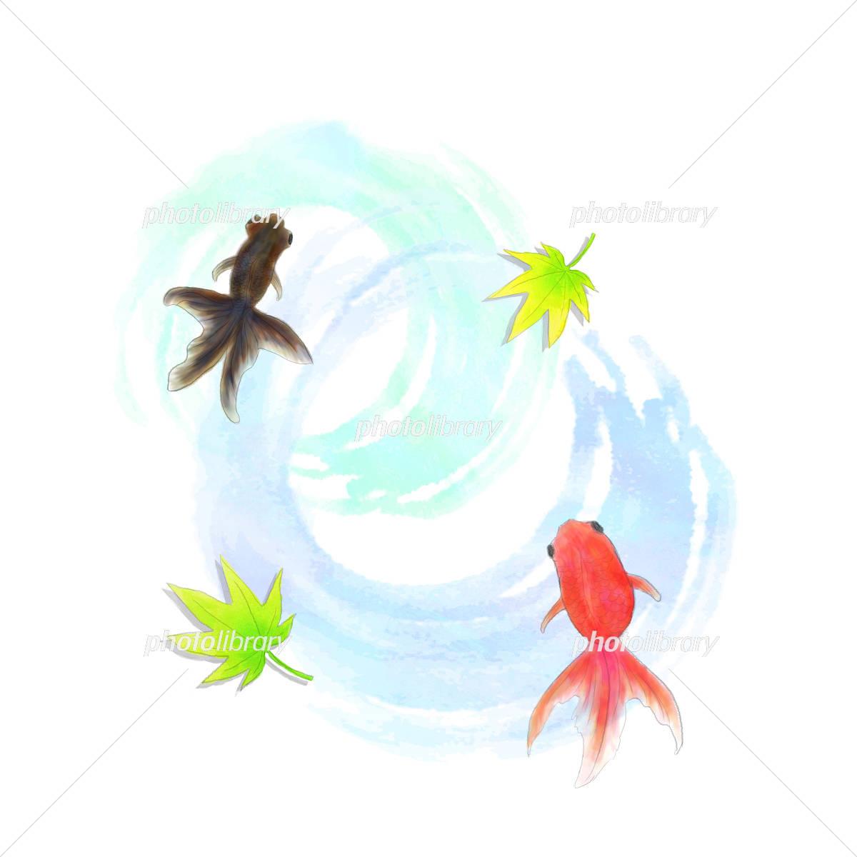 金魚 水彩風 イラスト素材 フォトライブラリー Photolibrary