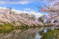 Takada moat of the Castle and the cherry trees Stock photo [4382391] Landscape