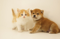 Dog and cat Stock photo [4462306] animal