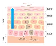 Turnover of skin [4466051] skin
