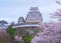 Himeji Castle and cherry Stock photo [4467516] Castle