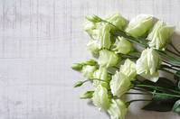Green Lisianthus Stock photo [4619164] Lisianthus