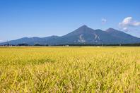 Aizu Bandai and rice Stock photo [4677471] Aizu