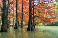 Forest Sasaguri Kyushu University of autumn Stock photo [4749747] Fukuoka
