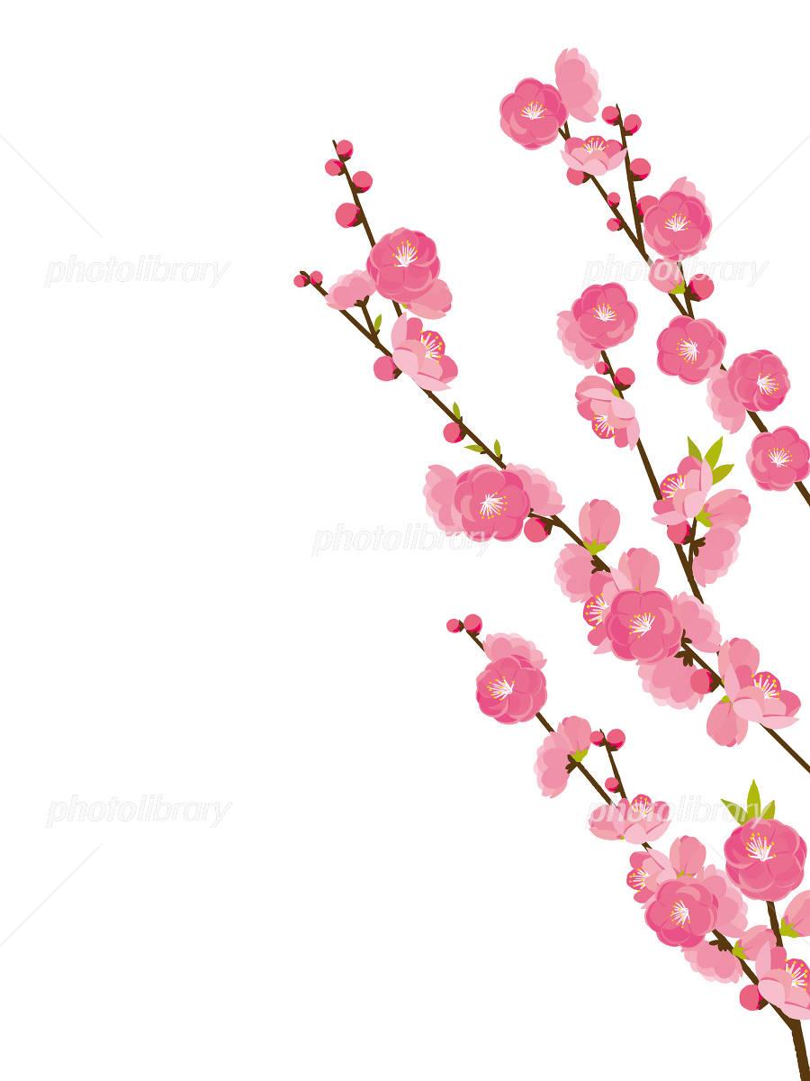 の 花 イラスト 桃