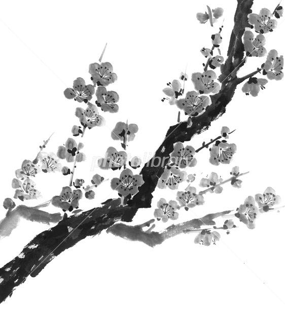 梅 イラスト素材 4938593 フォトライブラリー Photolibrary